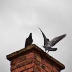 Vogels op schoorsteen