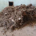 verwijderen vogelnest